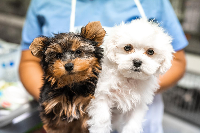 Puppy Boutique Las Vegas | Pet Stores at 4343 N Rancho Dr - Las Vegas NV