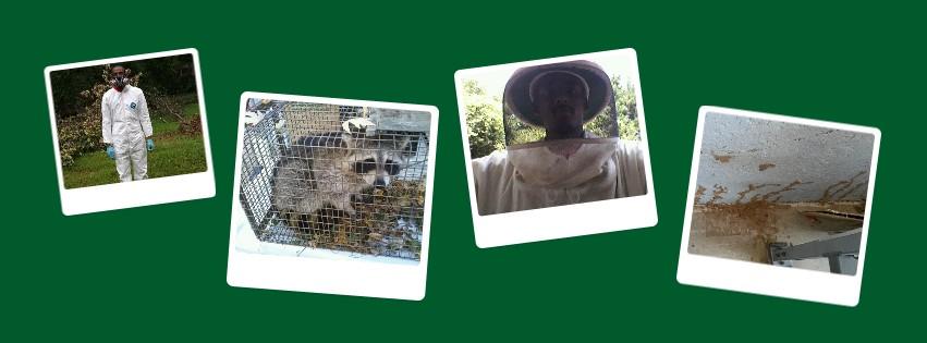Pest Proof Pest Management reviews | Home & Garden at 10432 Balls Ford Rd - Manassas VA