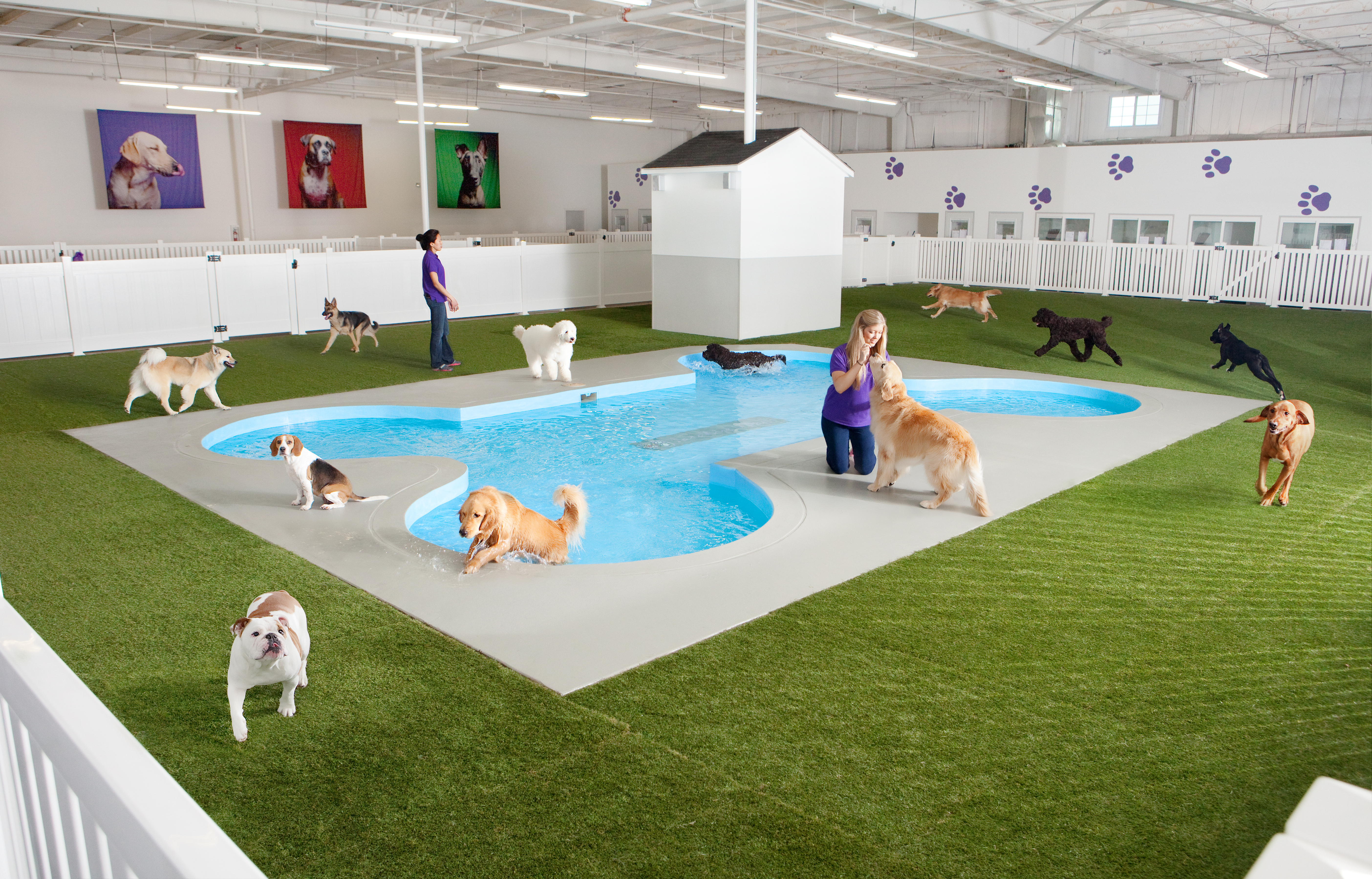 Paradise 4 Paws reviews | Pet Groomers at 3010 N Airfield Dr - DFW Airport TX