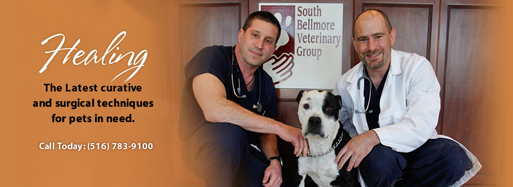 South Bellmore Veterinary Group reviews | Hospitals at 2506 Merrick Road - Bellmore NY