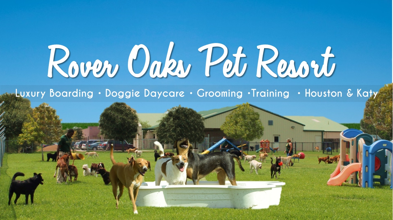 Rover Oaks Pet Resort Houston Reviews Consumer Services At 2550