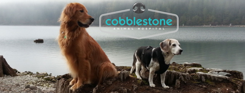 Cobblestone Animal Hospital | Veterinarians at 600 NW Gilman Blvd Unit D - Issaquah WA - Reviews - Photos - Phone Number