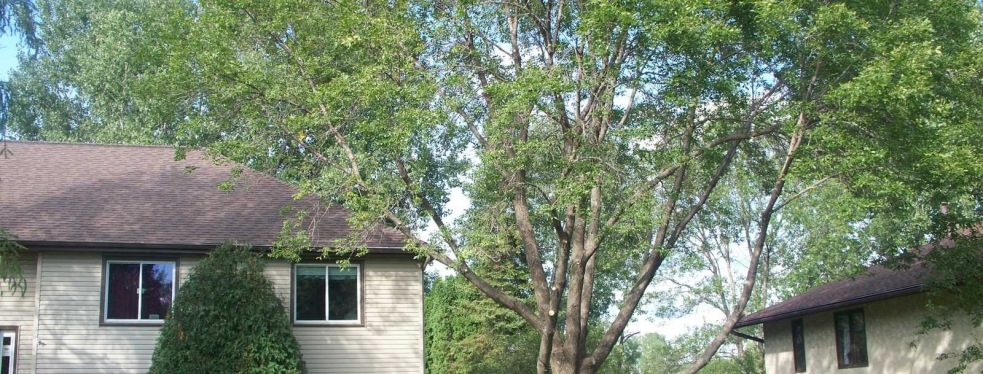 Arbortech Stump and Removal reviews | Tree Services at 6332 Rhode Island Avenue North - Minneapolis MN
