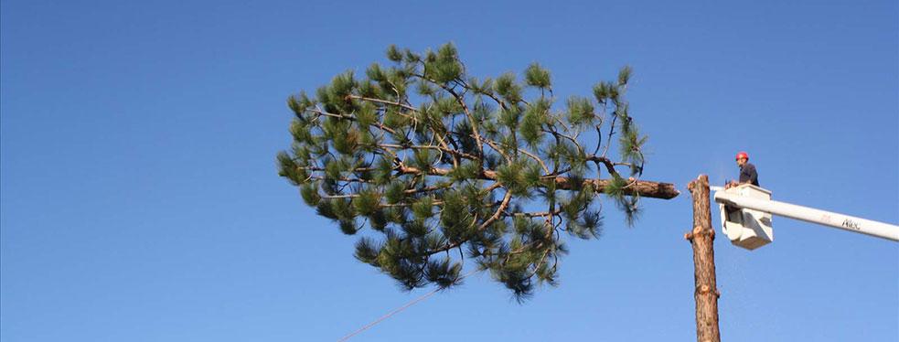 Estates Tree Service reviews | Home Services at 23467 Glenn Ellen Way - Ramona CA