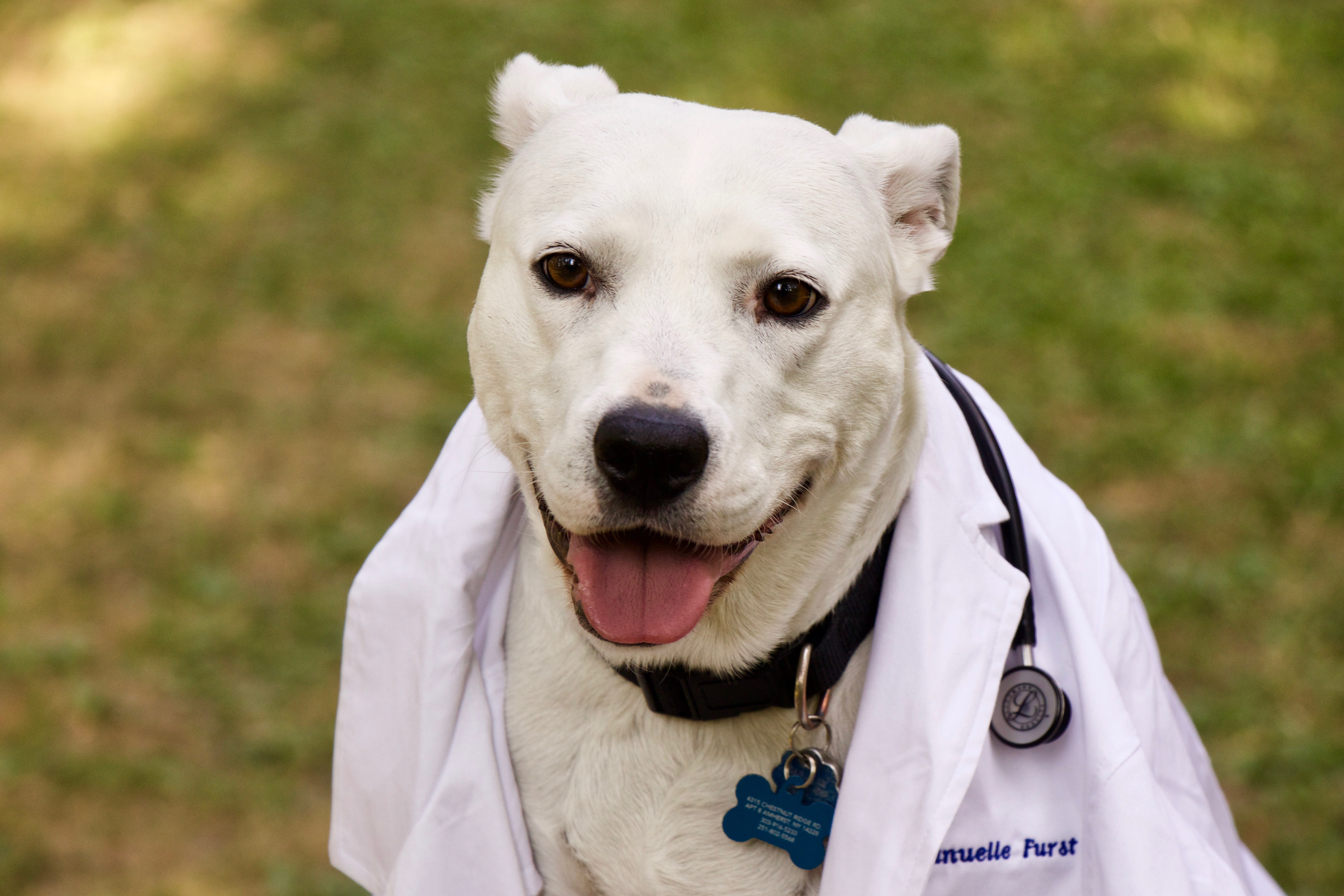 All Creatures Animal Hospital  reviews | Arts & Entertainment at 6429 Transit Road - East Amherst NY