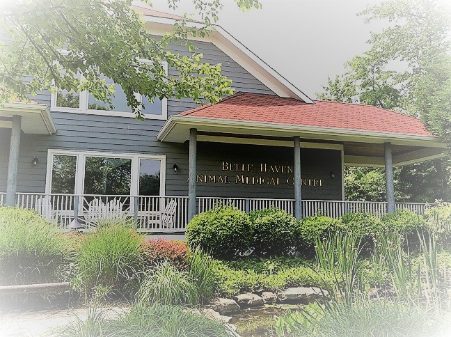 Belle Haven Animal Medical Centre reviews | Arts & Entertainment at 1221 Belle Haven Road - Alexandria VA