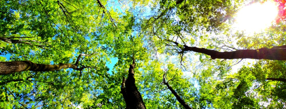 Executive Branch Tree Service reviews | Tree Services at 233 Township Line Rd. - Elkins Park PA