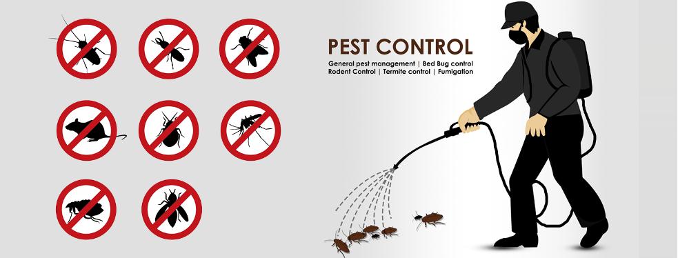 Axon Extermination reviews | Pest Control at 202 Du Bosquet - Pincourt QC
