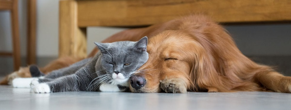 Peotone Animal Hospital reviews | Veterinarians at 431 S Governors Hwy - Peotone IL