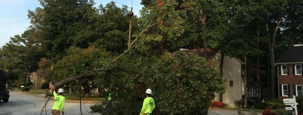 AAA Tree Service reviews | Tree Services at 5400 Oakwood Rd - Alexandria VA