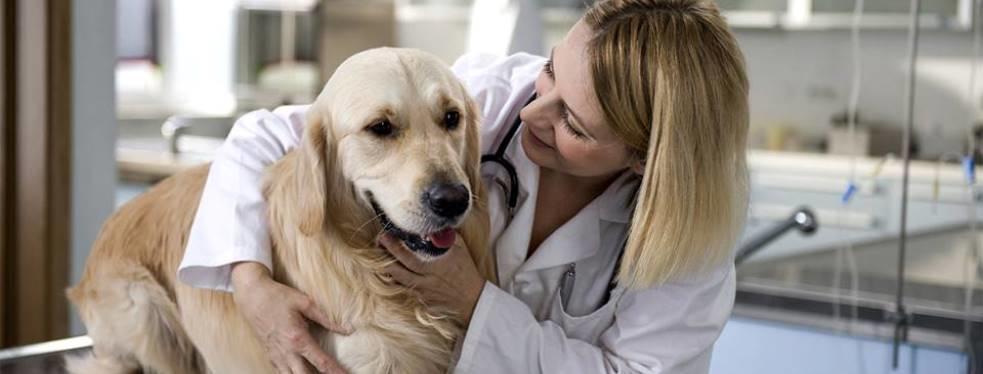 Clark Animal Hospital reviews   Veterinarians at 10510 Manchester Road - Kirkwood MO