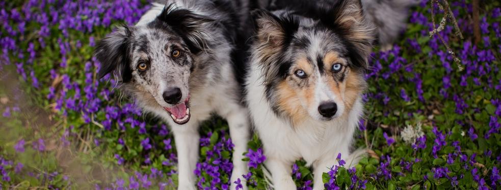 Calaveras Veterinary Clinic reviews | Veterinarians at 140 W Calaveras Blvd - Milpitas CA