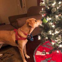 Marissa Showalter review for Animal Medical Center of Greeneville