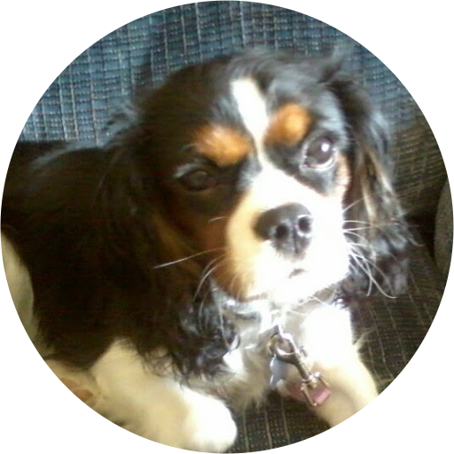 Erica Hanson's Profile Image