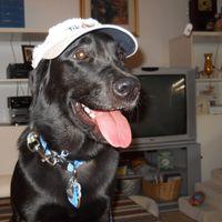 Fredricka Tettemore review for Animal Medical Center of Greeneville