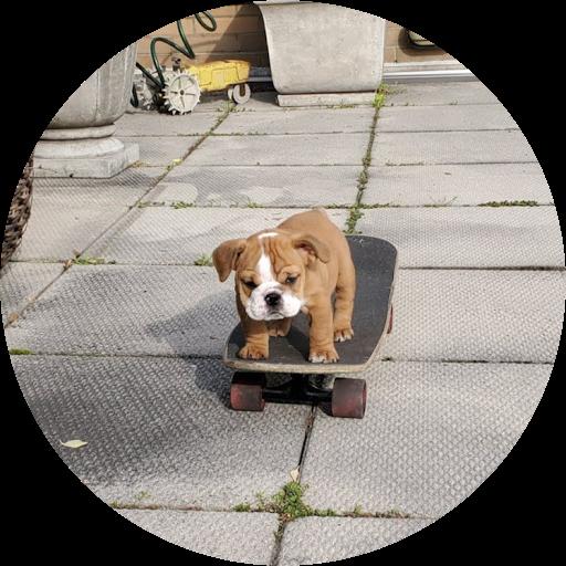 Wilhemina The Bulldog avatar