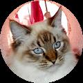 Karen Zellmer's Profile Image