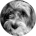 Ivy Balnarine's Profile Image