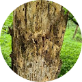 Doug Penn's Profile Image