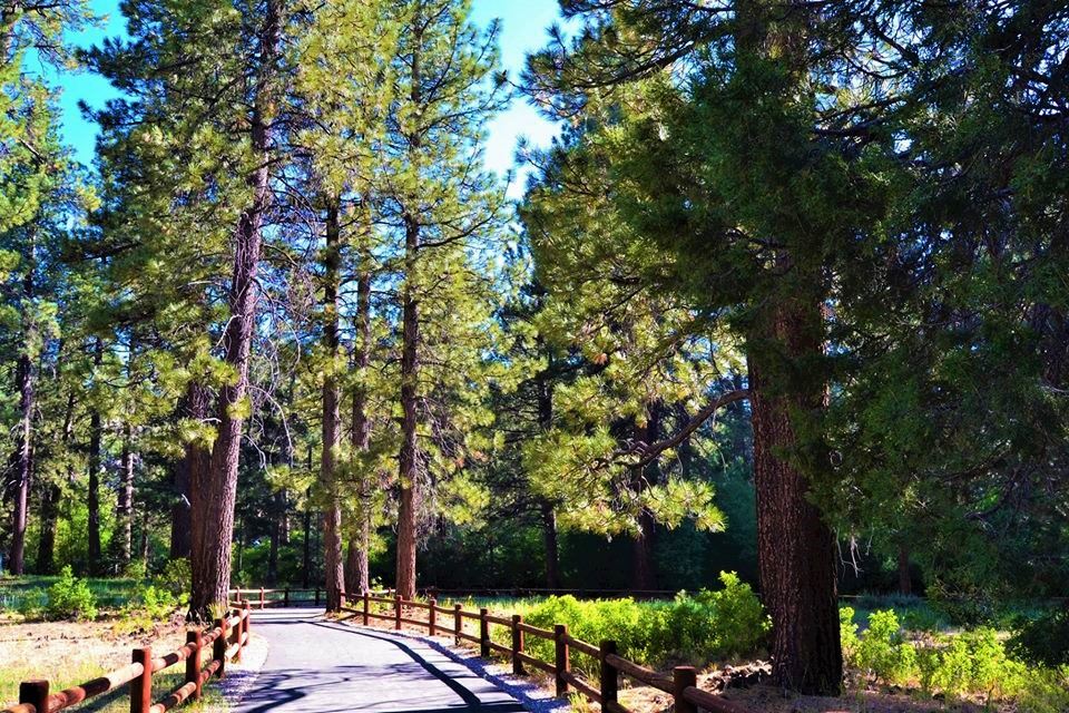 Golden Bear Cottages - AAA approved cabins and family vacation rentals reviews | Hotels & Travel at 39367 Big Bear Boulevard - Big Bear Lake CA