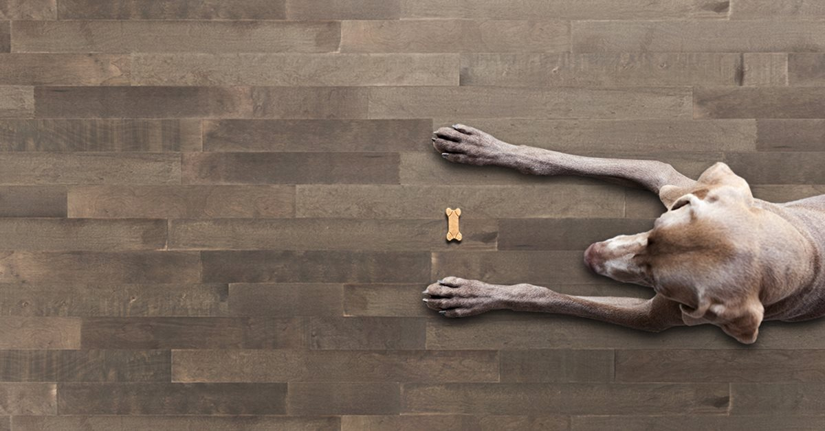 Akel's Carpet One reviews | Carpeting at 5500 Landers Road - North Little Rock AR