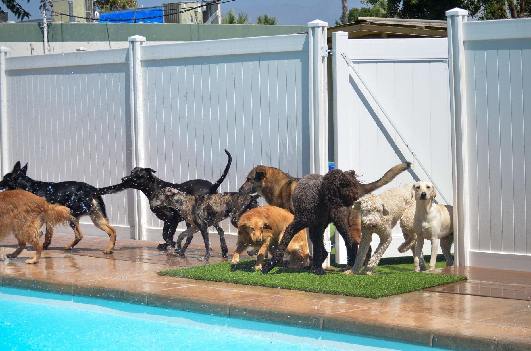 Ruff House Pet Resort (Riverside) reviews | Pet Services at 3035 Chicago Ave - Riverside CA