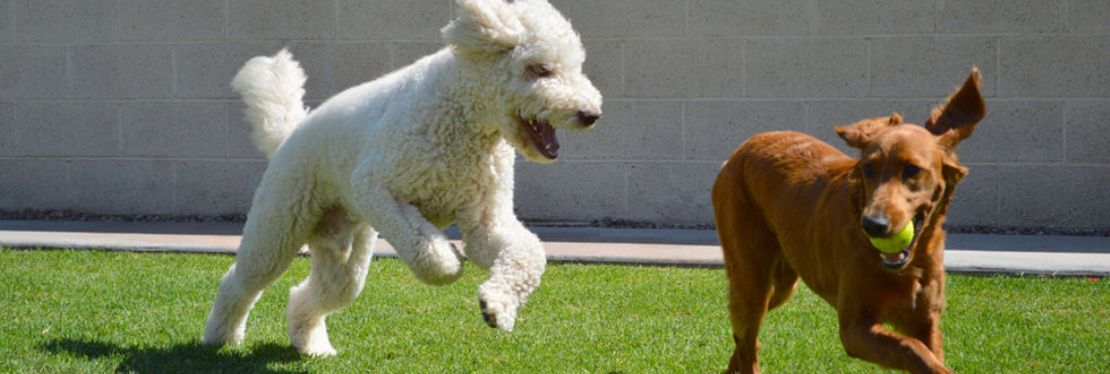 4 Paws Pet Resort reviews | Pet Boarding at 1608 N Greenfield Road - Mesa AZ