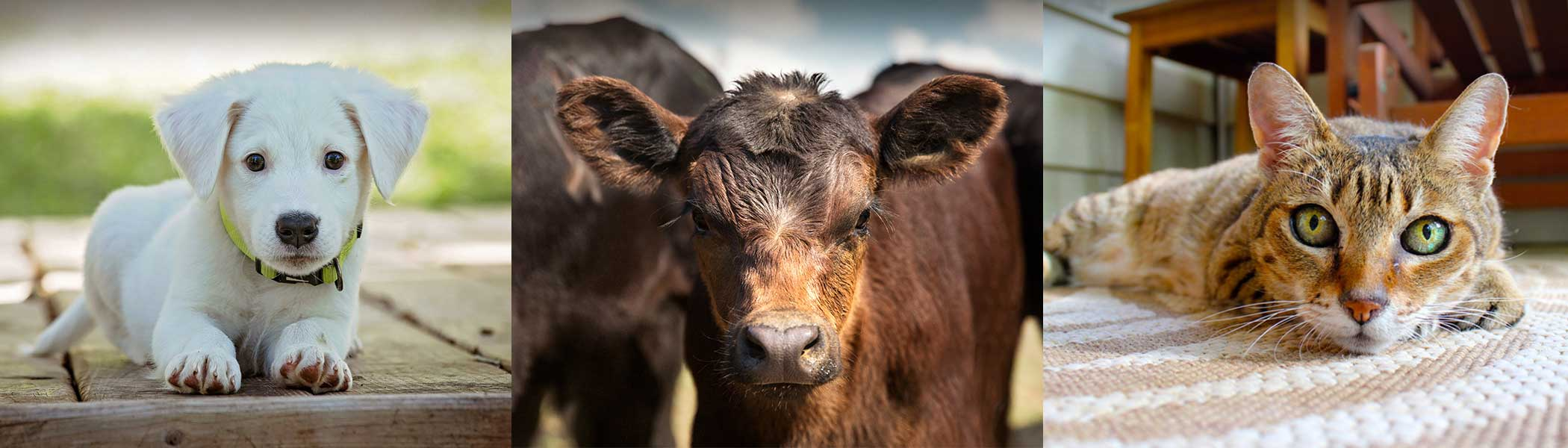 Animal Health Clinic Of Humboldt reviews | Veterinarians at 626 2 St - Humboldt SK