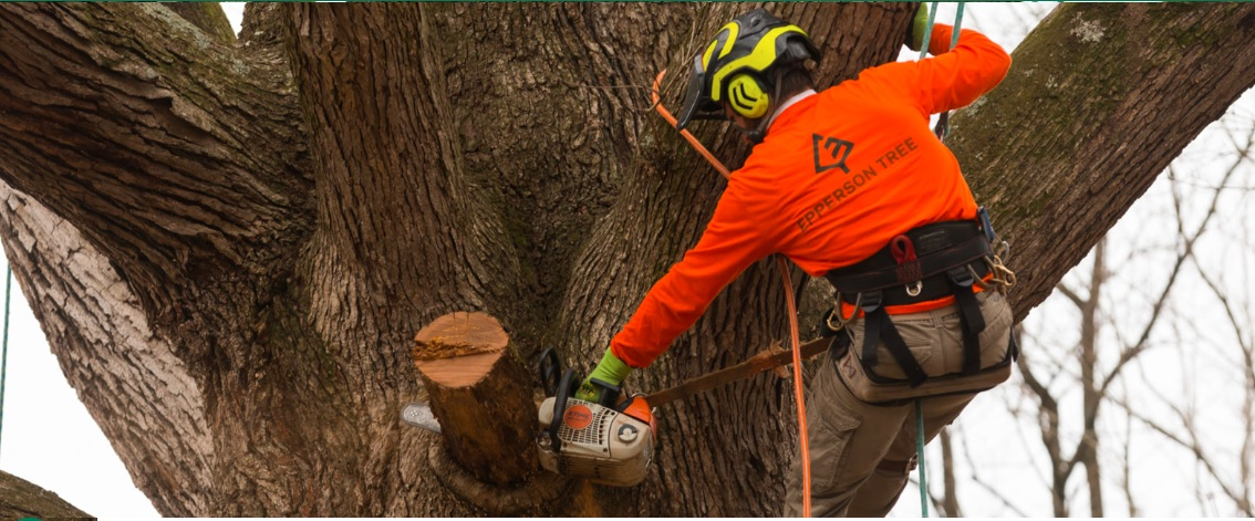 Epperson Tree reviews | Tree Services at 499 Old Dana Road - Hendersonville NC