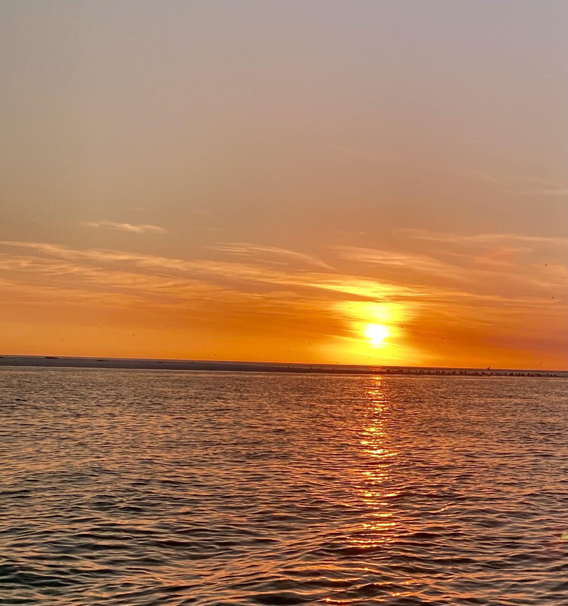 Anna Maria Island Dolphin Tours reviews | Boat Tours at 5325 Marina Drive - Holmes Beach FL