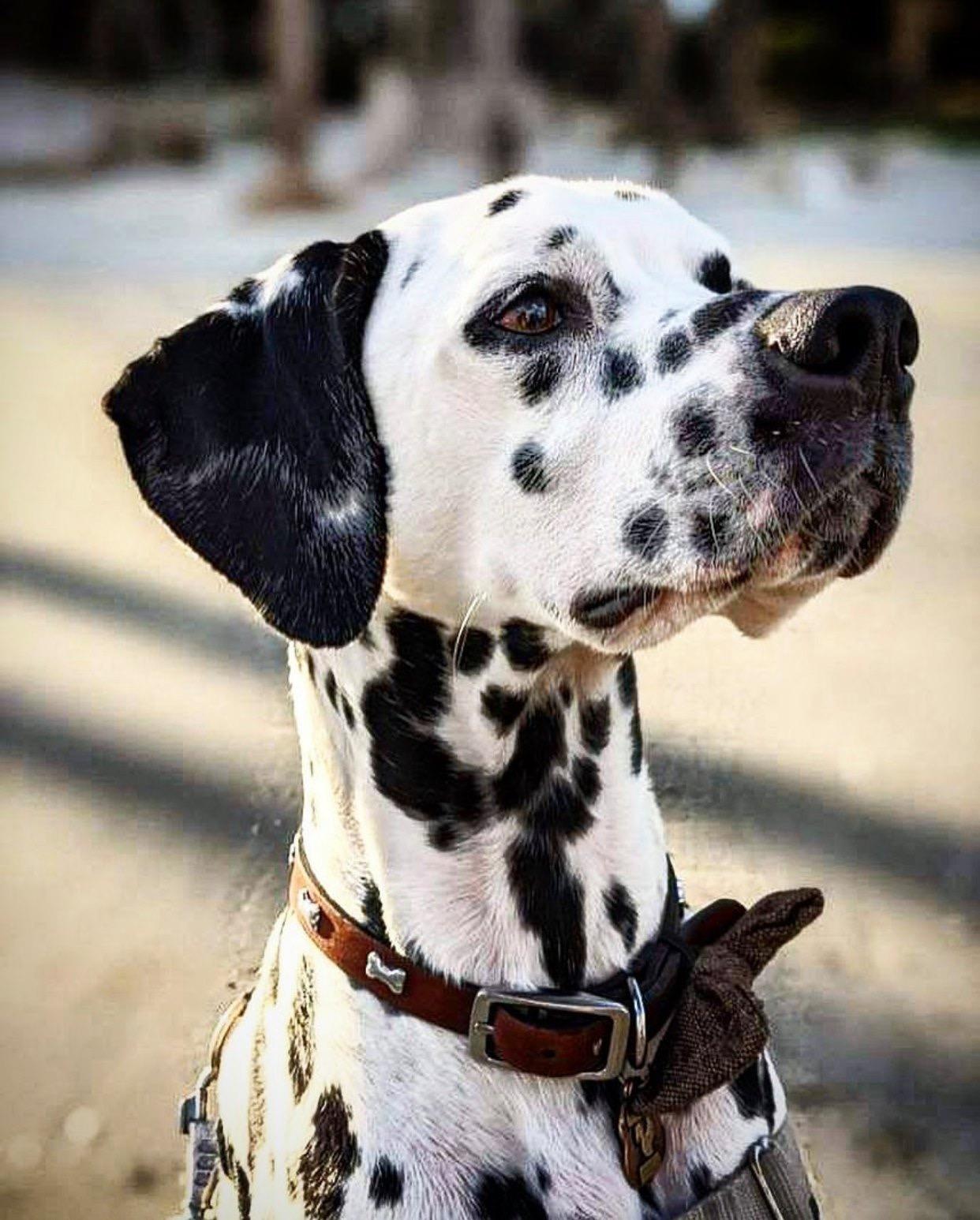 Providence Square Veterinary Clinic reviews | Veterinarians at 1035 Kempsville Rd - Virginia Beach VA