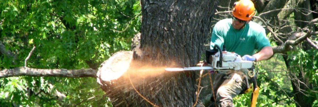 Oak Tree Service reviews | Tree Services at 1158 Boyd Road - Marietta GA