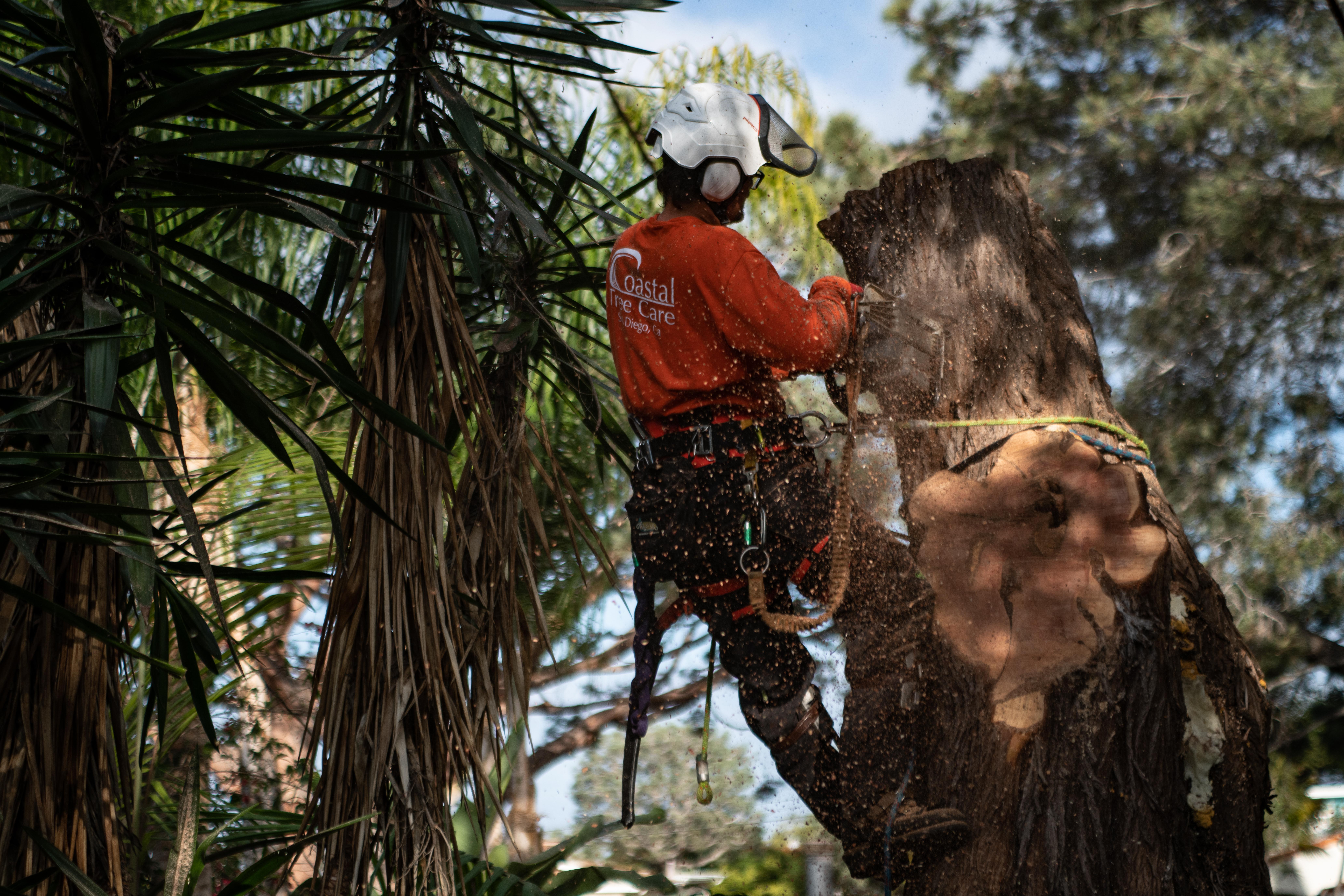 Coastal Tree Care reviews | Tree Services at 4349 Twain Ave - San Diego CA