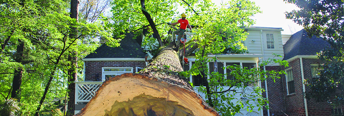 TreeJob.com reviews | Tree Services at 2032 Airport Ct SE - Marietta GA