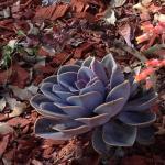 Calirose757 review for Salumeria