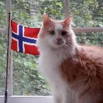 norskies review for Sticks Kebob Shop