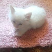 Sharon Ann review for Civic Feline Clinic